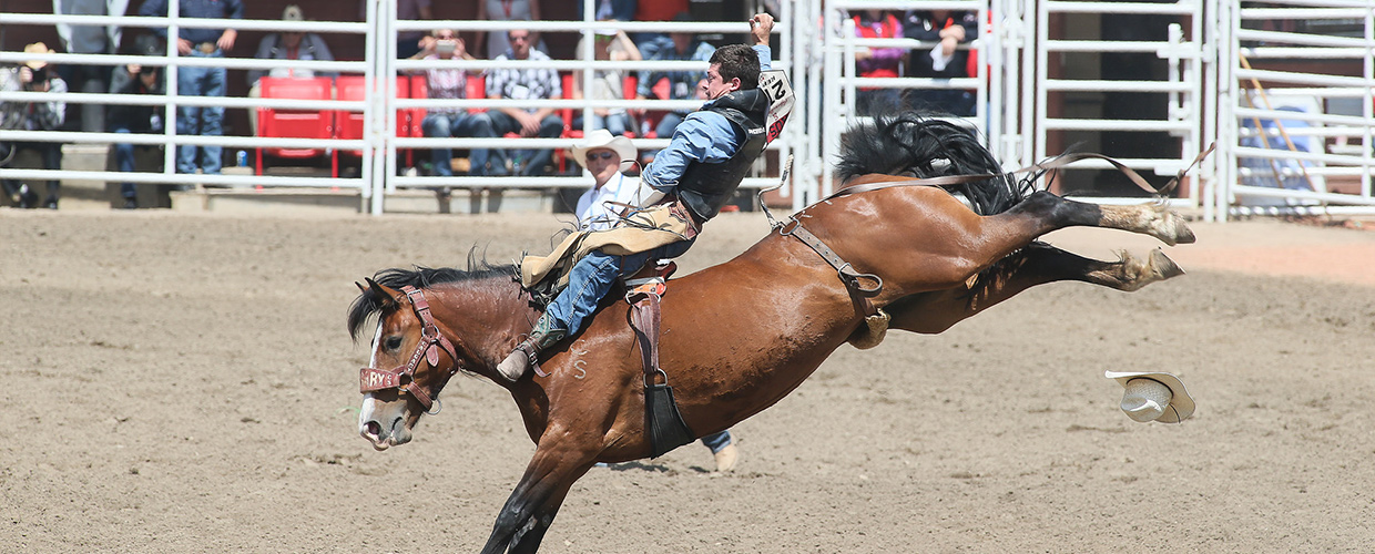 Results Amp Draws Calgary Stampede